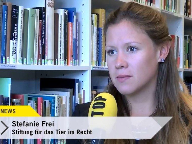 Youtube Top News Tele Top vom 20.10.2017 mit Stefanie Frei zum Thema Hundebiss-Vorfall in Steckborn