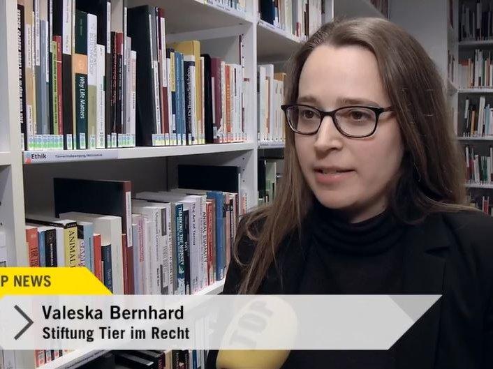 Youtube Top News Tele Top vom 3.1.2018 mit Valeska Bernhardt zum Thema Jagdunfall in Affeltrangen