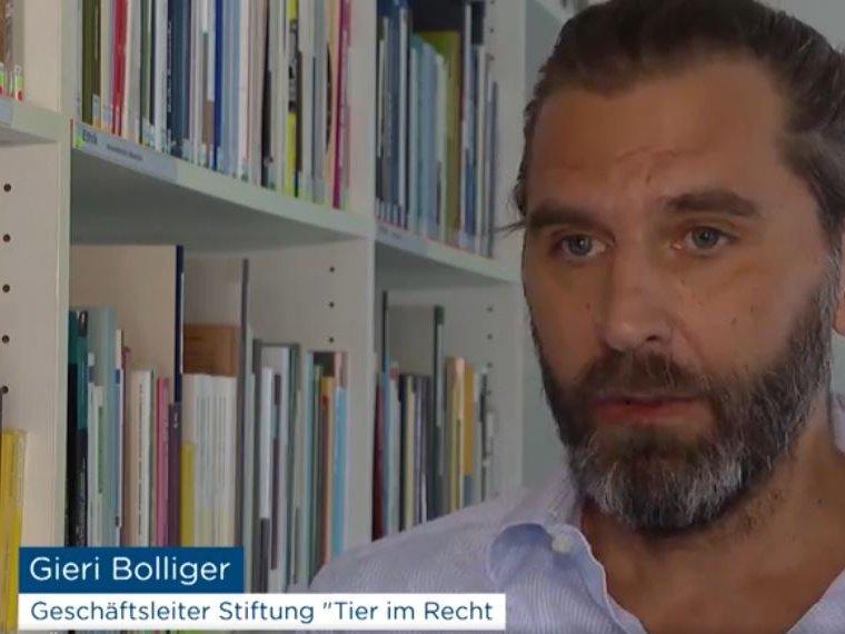 Tele Züri ZüriNews vom 3.6.2020: Gieri Bolliger zum Thema Missstände in Schweizer Schweinehaltungen