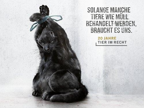 Tiere wie Müll_Katze_Ruf Lanz Kampagne