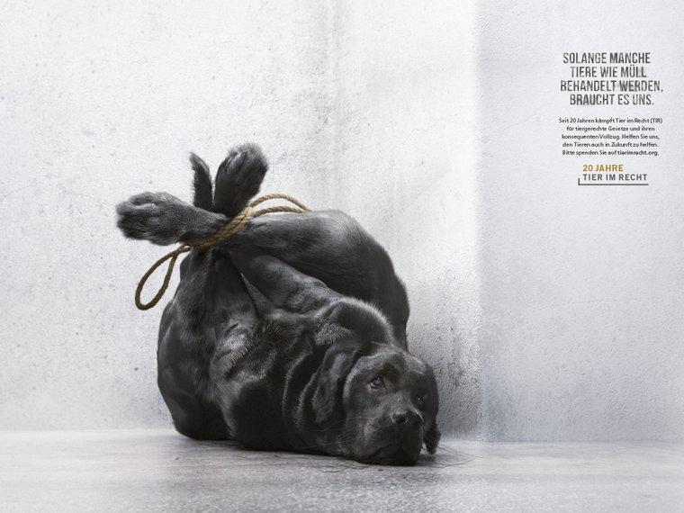 Kampagne Tiere wie Müll Hund RufLanz