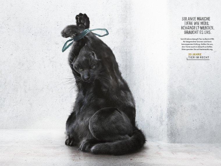 Kampagne Tiere wie Müll Katze RufLanz