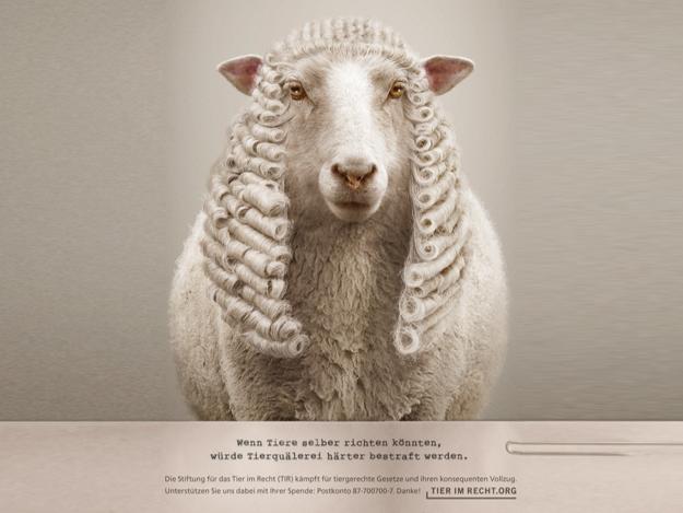 Tierische Richter Schaf quer