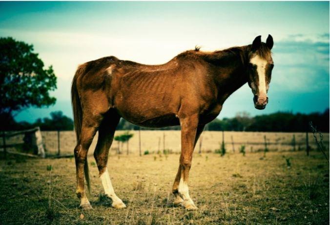 Titelbild Tierschutzstrafpraxis 2014