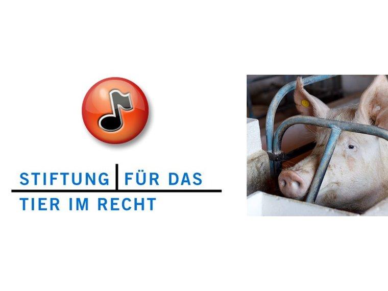Youtube Radiosendung Treffpunkt DRS1 vom 6.12.2012 mit Gieri Bolliger zum Thema Tierquälerei