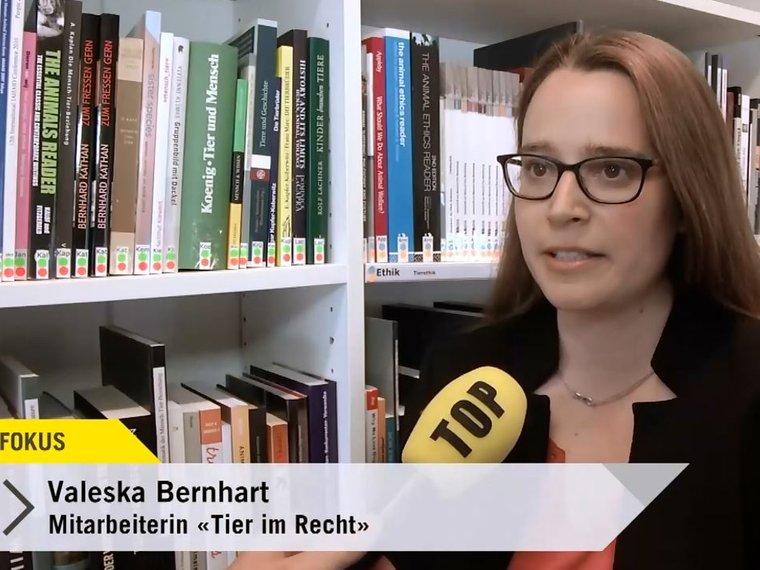 Youtube Top Fokus Tele Top vom 15.5.2017 mit Valeska Bernhart zum Thema Verzehr von Insekten