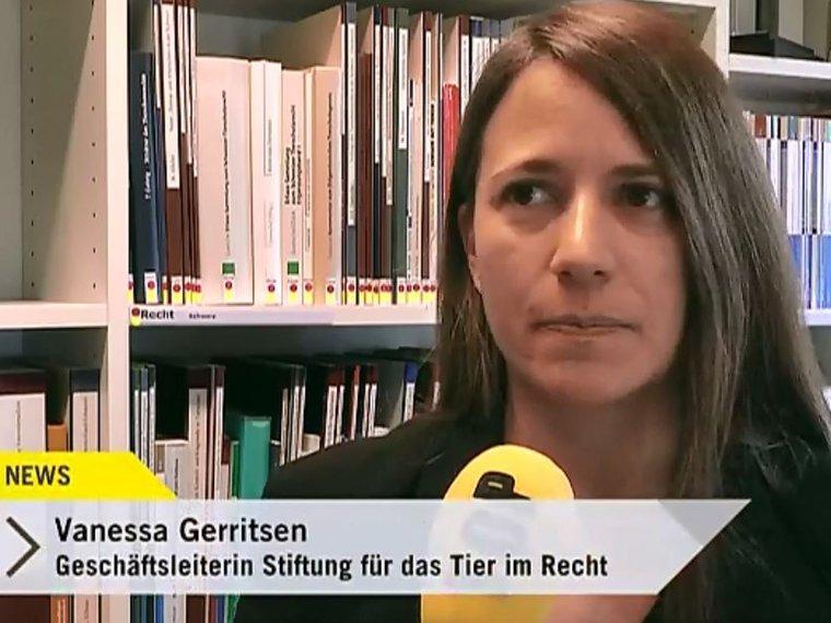 Vanessa Gerritsen in Tele Top News vom 21.3.2017 zu den ausgesetzten 30 Ratten in Winterthur