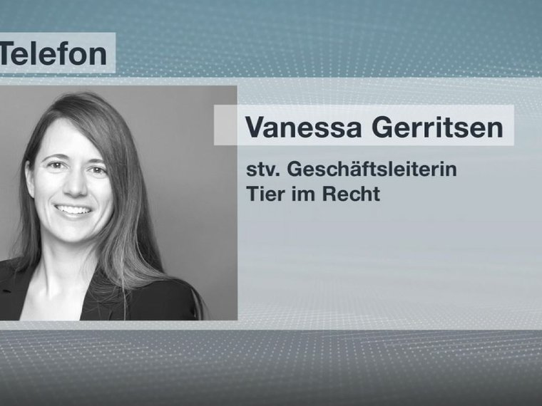 Vanessa Gerritsen TVO News 27.2.2019