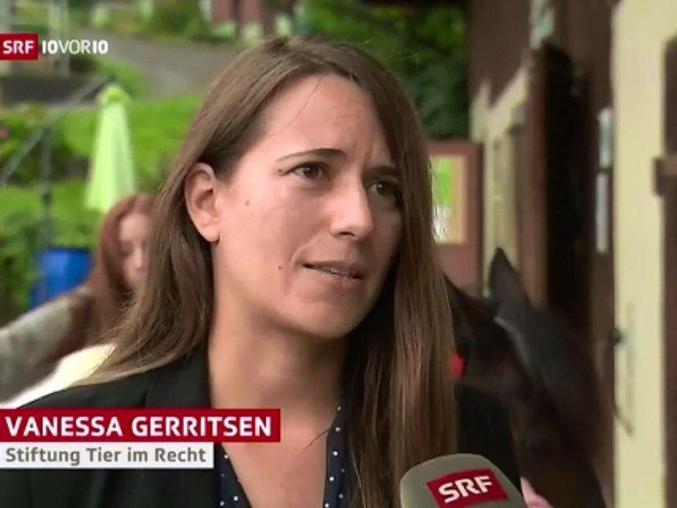 Youtube 10vor10 ARF vom 8.8.2017 mit Vanessa Gerritsen zum Thema gravierender Tierschutzfall im Kanton Thurgau