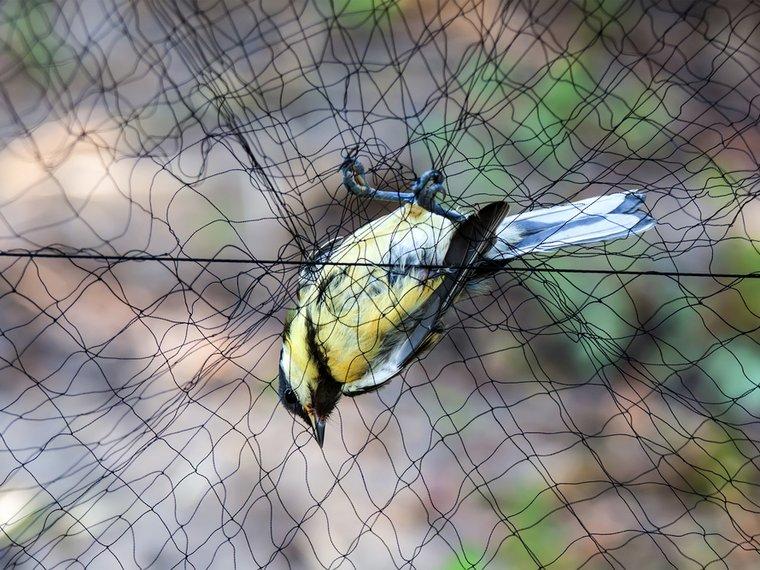 Vogel im Netz.jpg