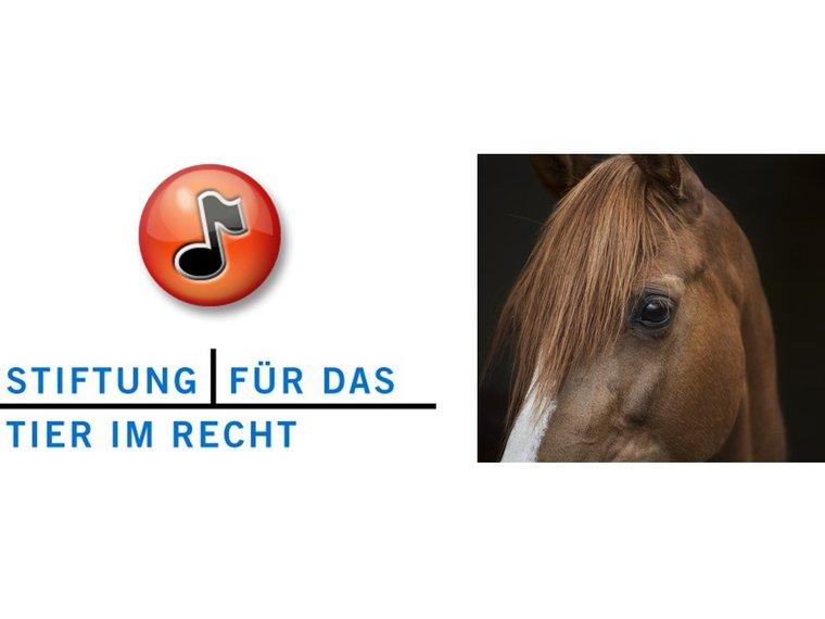 Youtube Radiosendung Forum SRF vom 17.8.2017 Schützen wir unsere Tiere genügend vor Tierquälern