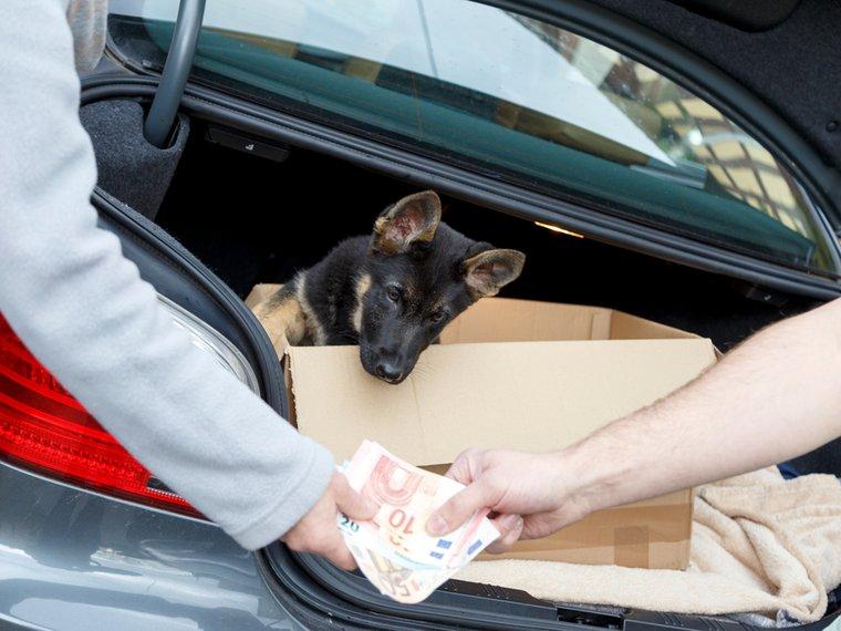 Hund Welpenhandel