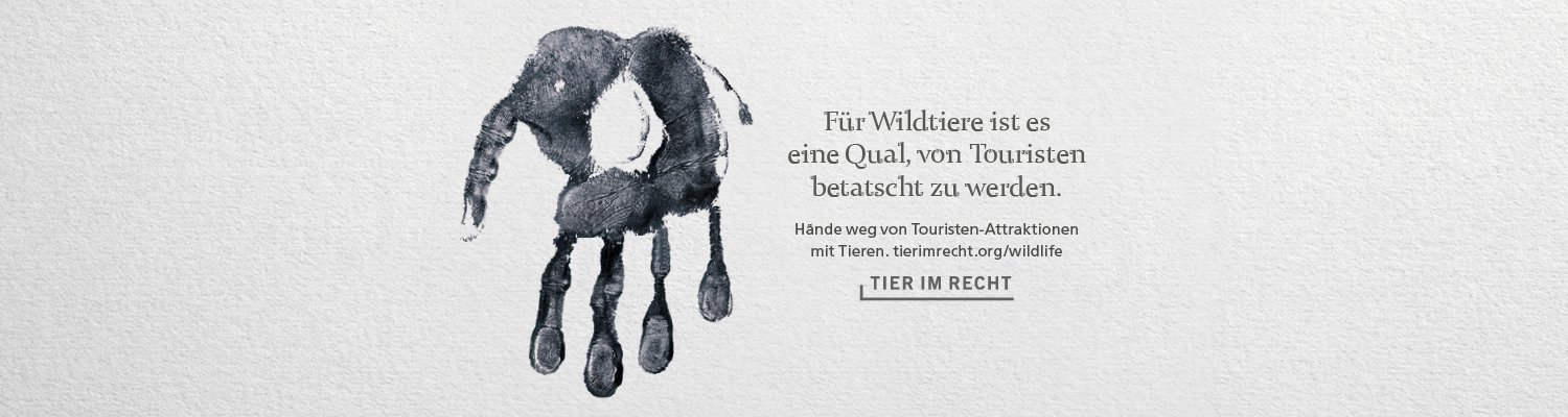 Kampagne Wildlife Header Elefant