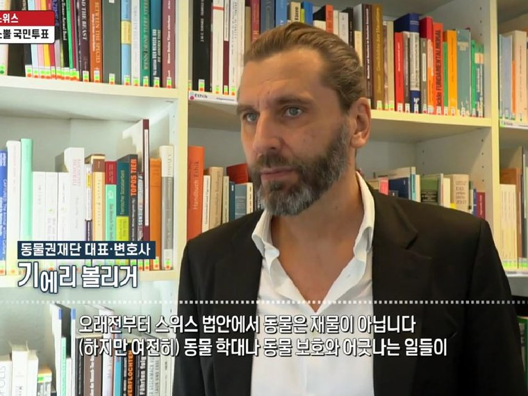 Gieri Bolliger bei YTN Korea online über das Enthornen von Rindern