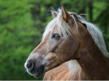 Pferd_neu