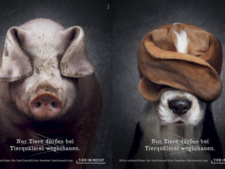 Double Schwein und Hund, Nur Tiere dürfen bei Tierquälerei wegschauen