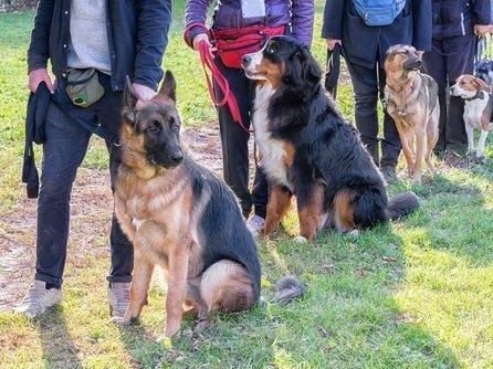 Hund und Halter am Hundekurs